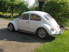 Käfer vom Breiti